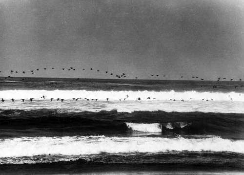 , 'Flock of Sea Birds or Flight Over the Sea,' 1939, Susan Spiritus Gallery