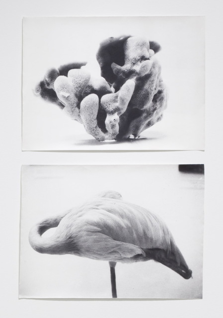 , 'From Symmetry and Architecture (Sponge-Flamingo),' 1997-2005, ProjecteSD