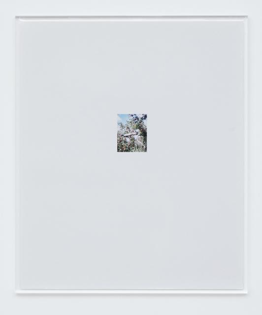 , 'Apple Tree 2,' 2017, Tomio Koyama Gallery