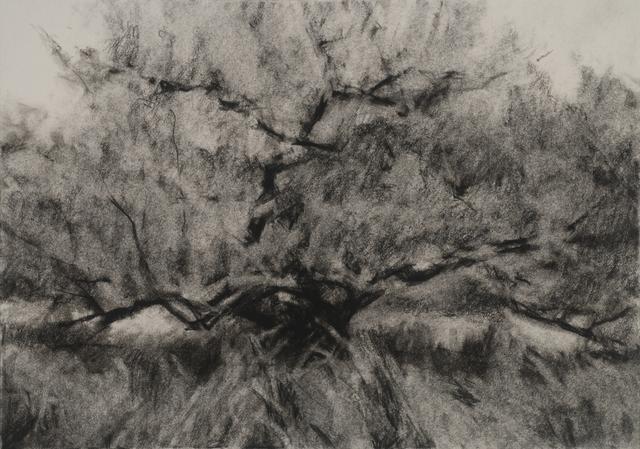, 'Orchard #10,' , Dowling Walsh