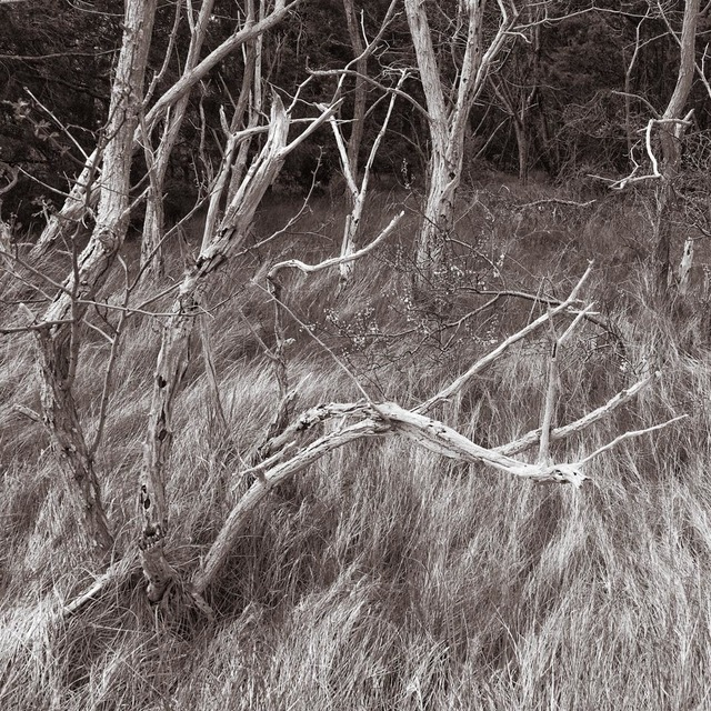 Lee Backer, 'Trees and Grass I, Wellfleet, Massachusetts', Soho Photo Gallery