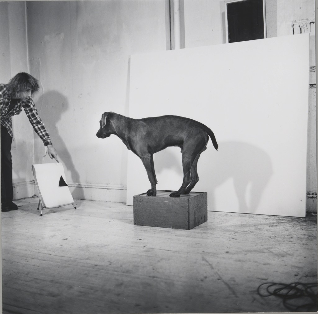 Before/On/After: William Wegman and California Conceptualism | The ...