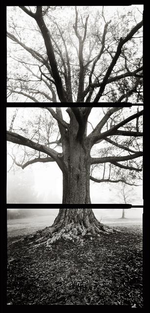 , 'Fog,' 2007, SOCO GALLERY