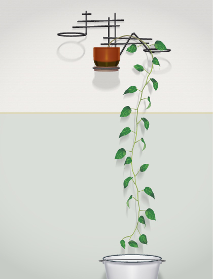 Kristóf Murányi, 'Climbing Plants', 2014, MyMuseum