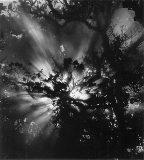 , 'Untitled (Sunburst, Hawaii),' 1978, JRB Art at The Elms
