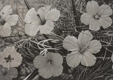 Sbiheul Flower