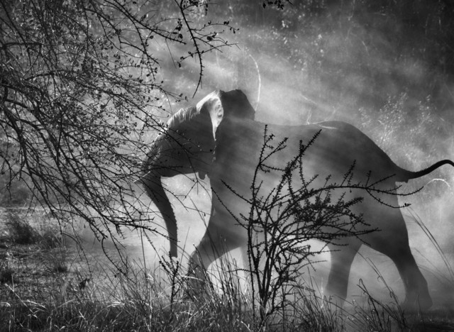 , 'Kafue National Park, Zambia,' 2010, Hafez Gallery