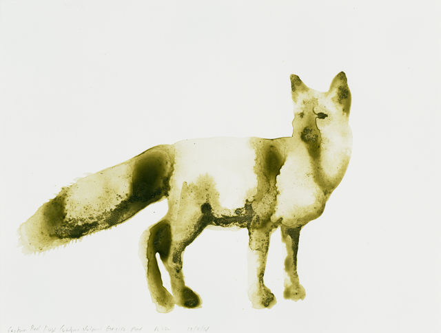 , 'Eastern Red Fox (Vulpes vulpes),' 2014, Parrish Art Museum