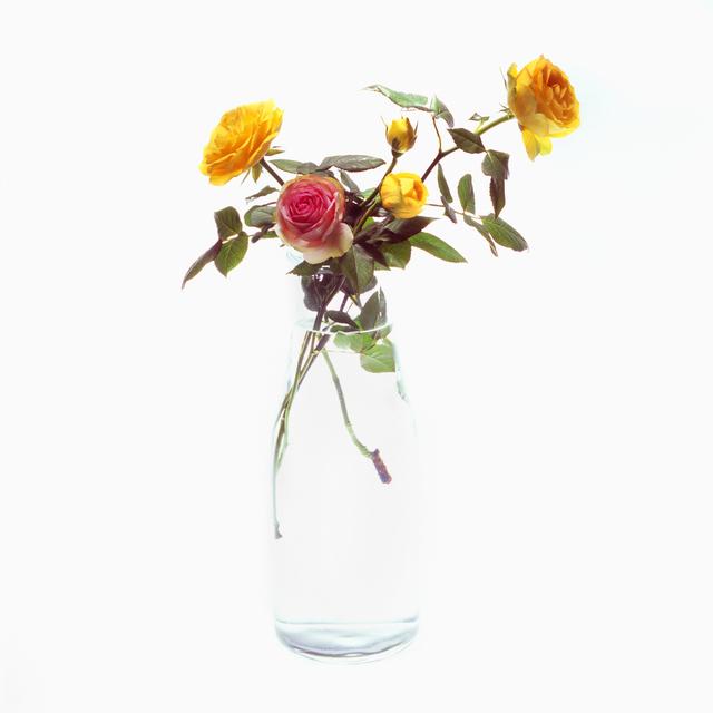 , 'Rose,' 2015, Gallery LVS