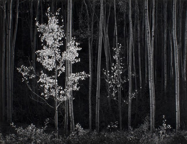 , 'Aspens, Northern New Mexico ,' 1958, Gallery 270