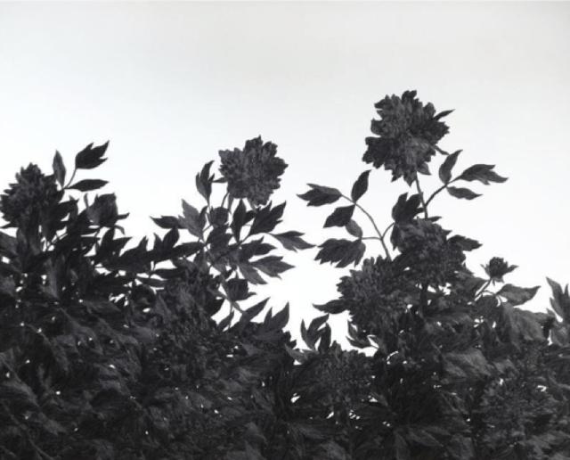 , 'Wind,' 2014, GALERÍA ETHRA