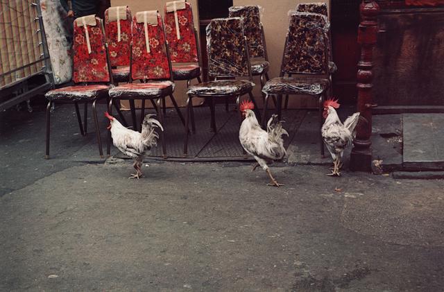 Helen Levitt, 'Untitled (Three Rosters), New York City, New York', 1971, Robert Klein Gallery