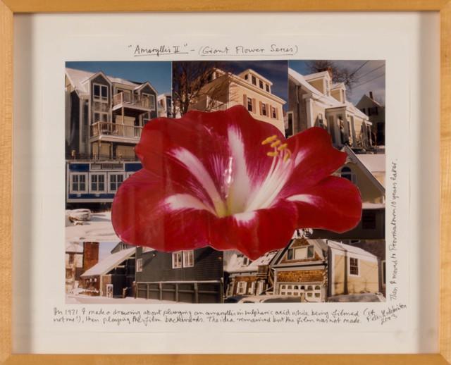 Peter Arthur Hutchinson, 'Amaryllis II (Giant Flower Series)', 2003, Doyle