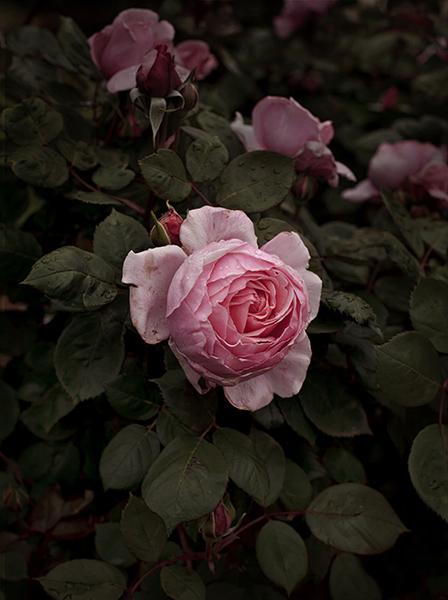 , 'Bloom #9,' 2018, MARS
