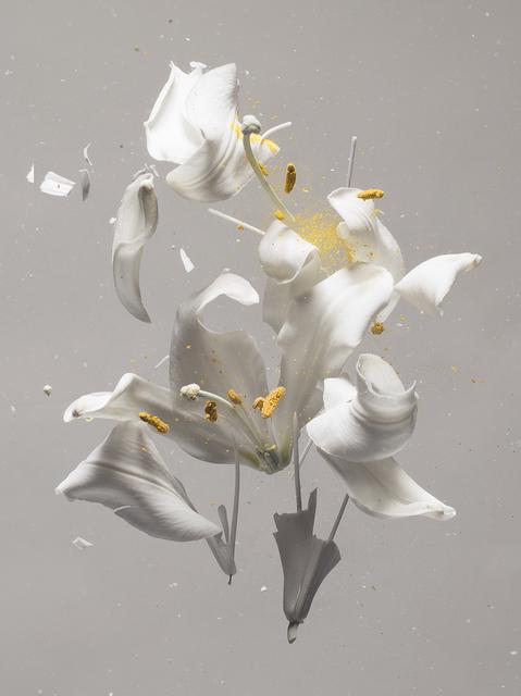 , 'Lilium Candidum D01,' 2018, Yancey Richardson Gallery
