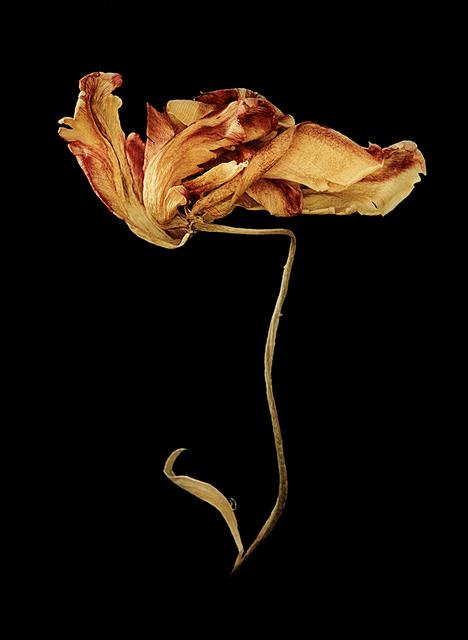 , 'Ur Namnlösa växter mot svart, 1 (From un-named plants on black, 1),' 2000, CFHILL