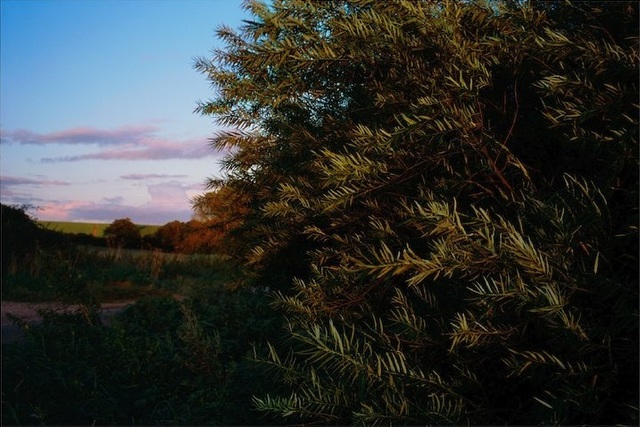 , 'Osier Willow, Norfolk,' 2012, Osborne Samuel