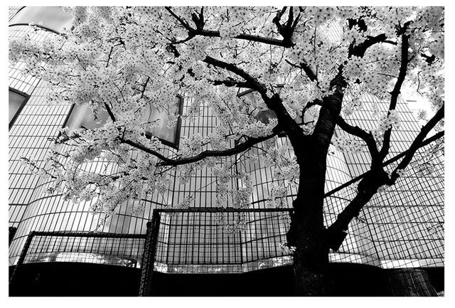 """, '""""Tokyo Blur"""" Series,' 2013, Patricia Conde Galería"""