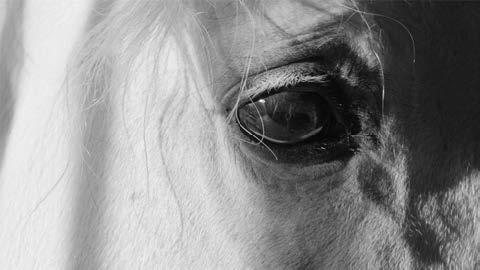 , 'Horse (Eye) I,' 2017, Fraenkel Gallery