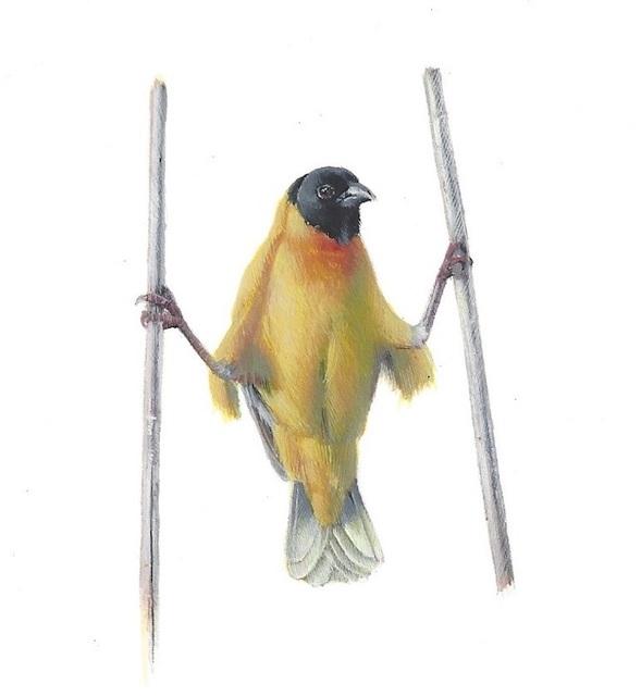 Dina Brodsky, 'Yellow Bird Akimbo', 2019, Garvey | Simon