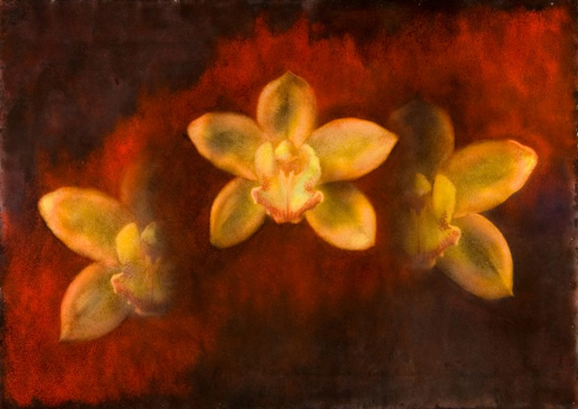Maggie Hasbrouck, 'Star (Yellow Orchids)', 2011, Bill Lowe Gallery