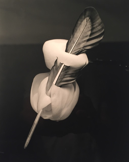, 'Feathered Magnolia,' 2018, Foto Relevance