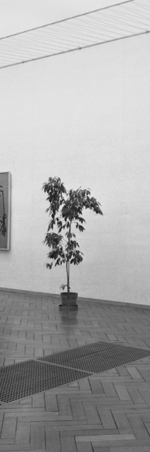 Inge Meijer, 'The Plant Collection III ', 2019, Akinci