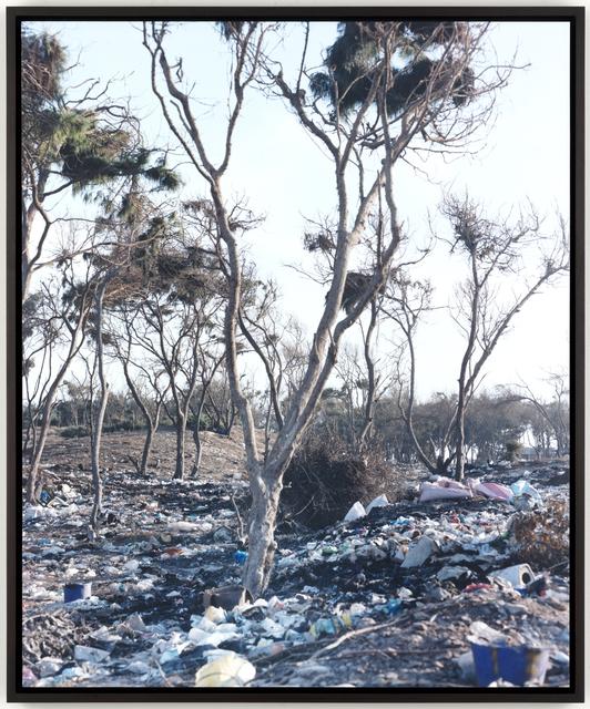 , 'Forest,' 2009, Ginerva Gambino