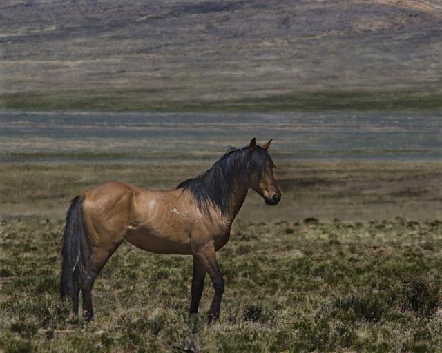 , 'Sulphur Spring Wild Stallion,' 2017, Bitfactory Gallery