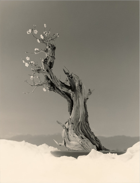 , 'Bonsai #4023,' 2019, Jackson Fine Art