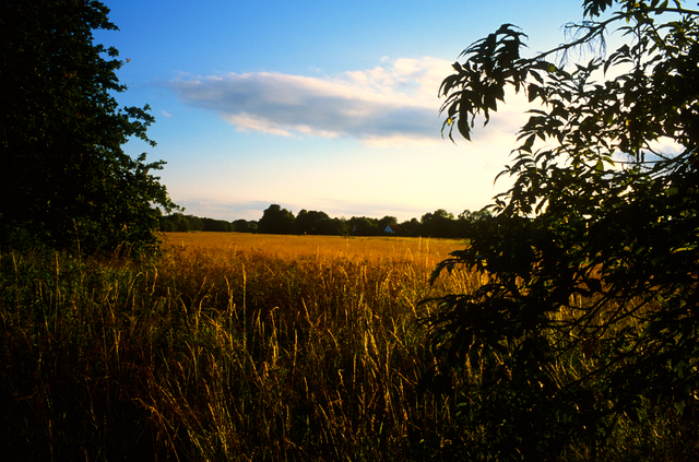 Justin Partyka, 'Landscape and Cloud, Mellis Common, Suffolk', 2014, Osborne Samuel