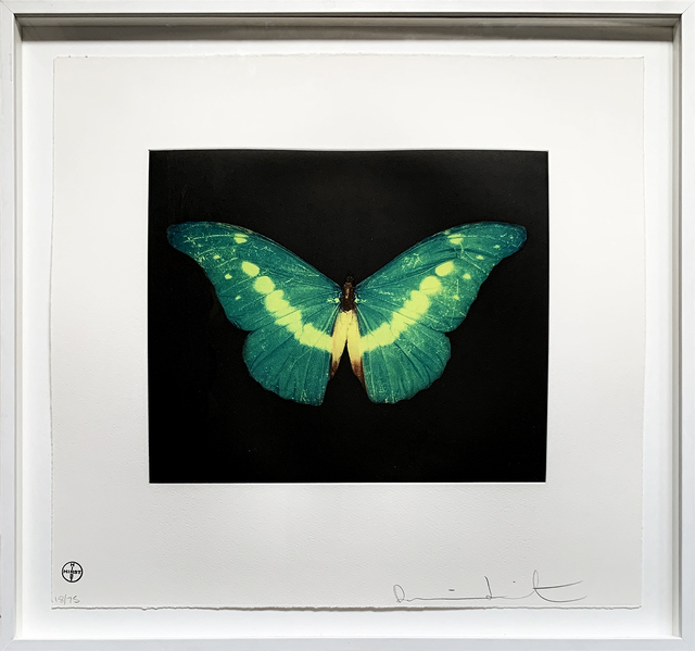 Damien Hirst, 'To Belie', 2008, Oliver Clatworthy Gallery Auction