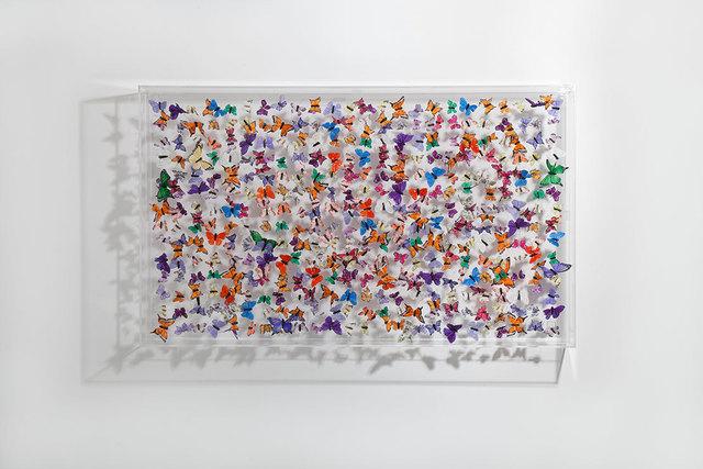 Michael Olsen, 'Butterflies', 2016, Tanya Baxter Contemporary