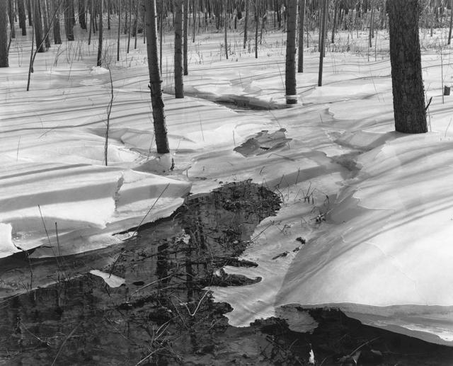 , '林中融冰 Melting Ice in Forest,' 2013, C14 Gallery