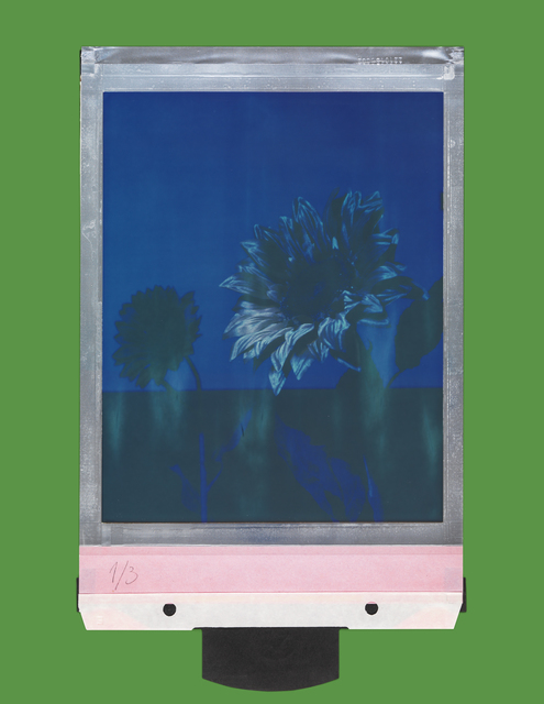 , 'Moonlight sunflower,' 2016, Sies + Höke