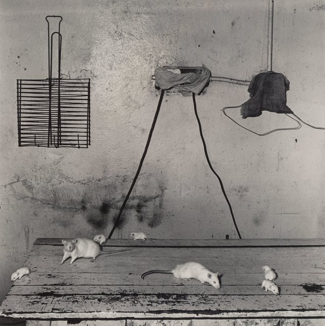 Roger Ballen, 'Untitled (Mice on Table)', 1999, Heritage Auctions