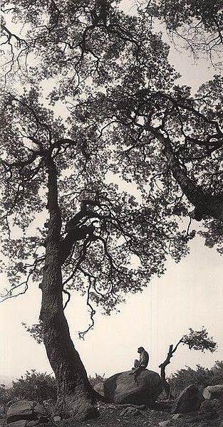 Pentti Sammallahti, 'Untitled, (Monkey On Rock)', 1994, Photography, Gelatin Silver Print, Peter Fetterman Gallery
