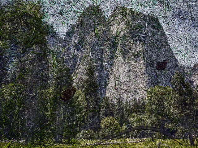, 'Tent Camera Image on Ground: View of Cathedral Rocks from El Capitan Meadow, Yosemite National Park,' 2012, Denver Art Museum