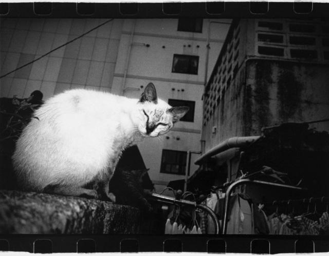Anders Petersen, 'Okinawa, Japan (cat)', 2000, Photography, Vintage gelatin silver print, IBASHO