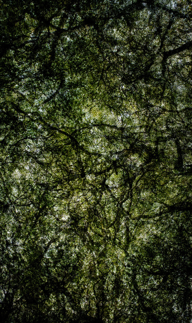 , 'Forest #23,' 2015, Taik Persons