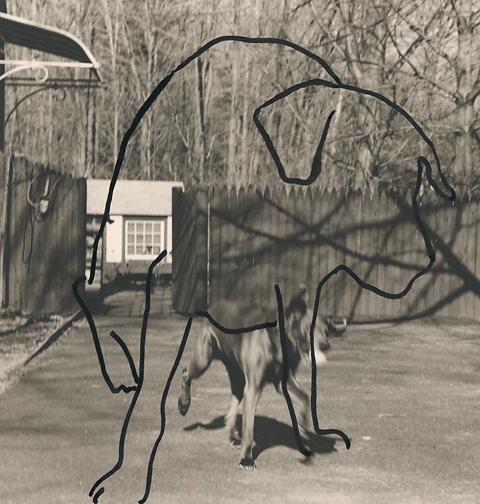, 'Dog Drawn on Dog,' 1983, Scott Nichols Gallery