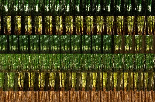 , 'La Taille des Antes - 24 hours x 60 minutes,' 2008, GBS Fine Art