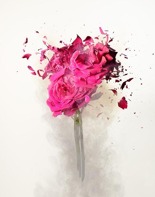 , 'Rose Explosion 3,' , ArtStar