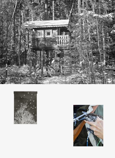 Sanna Kannisto, 'Forest hide-out, negative, spotted nutcracker being ringed', 2019, Photography, Pigment ink-print, maple frame, Helsinki Contemporary