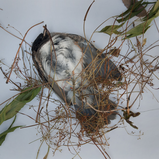 , 'TDTDC 24 (Dead Bird),' 2011, photo-eye Gallery