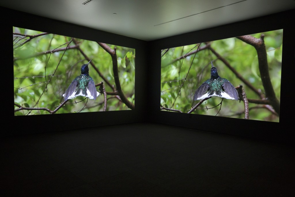 JANET BIGGS
