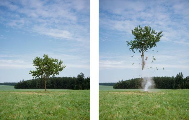 , 'Raketenbaum (5) (Rocket tree (5)),' 2014, Grieder Contemporary