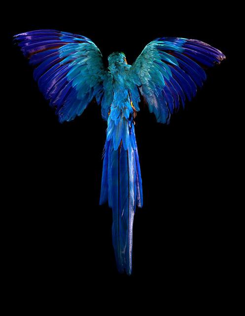 , 'Pride & Glory, Macaw,' 2012, Gallery Elena Shchukina
