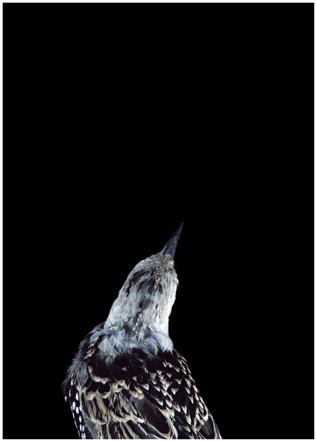 , 'Bad Bird #19,' , .M Contemporary