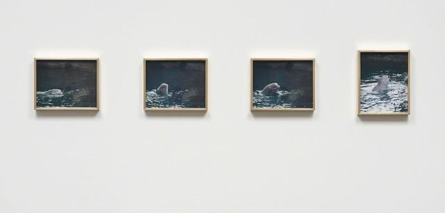 Elad Lassry, 'Porpoise', 2013, 303 Gallery